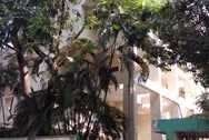 Main - Palm Crest, Bandra West