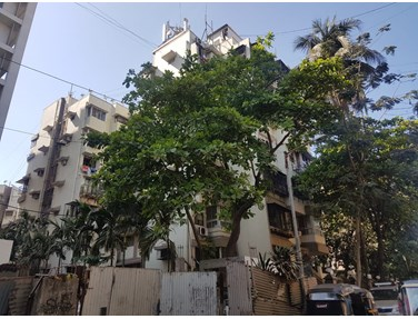 Flat on rent in Ivory Tower, Juhu