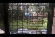 Garden - Akshay Girikunj, Andheri West